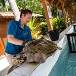 Turtle Rehabilitation Programme