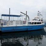 TAZ Whale boat trip.