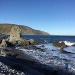 Photo de Seal Coast Safari