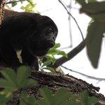 Beautiful monkeys in their natural habitat.