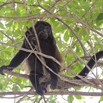 monkey in the tree on the beach
