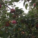 Photo de Apple Orchard Inn