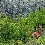 Photo de Glenbow Ranch Provincial Park
