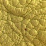 Bed Bug Closeup