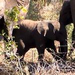 Hoyo-Hoyo Safari Lodge Φωτογραφία