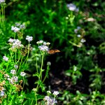 Foto de Lady Bird Johnson Wildflower Center