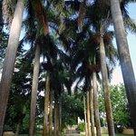 Jardins - Allee principale de la propriété
