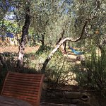 Wonderful Olive groves and vegetables from the owners garden.