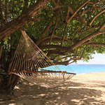 My hammock on the beach