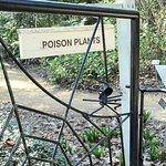 poisonous plant area