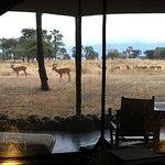 Photo de Chem Chem Safari Lodge