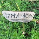 Foto di Camping Ideal Molino