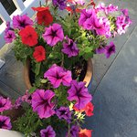Beautiful flowers on the patio!