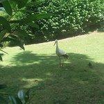 Parc de l'orangerie cette cigogne est en liberté