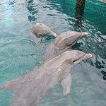 Photo of Ocean World Adventure Park, Marina and Casino