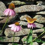 Foto de Lambertson's Brookside Daylilies