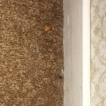 Crumbs on carpet near baseboard. More inattention by the cleaners.