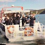 Swim with Dolphins Akaroa - Black Cat Cruises Foto