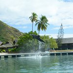 Photo de Moorea Dolphin Center