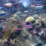 Foto de Sea Life Melbourne Aquarium