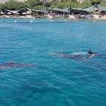 Photo de Dolphin Reef