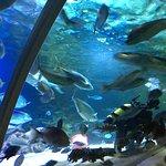 Kelly Tarlton's Sea Life Aquarium Foto