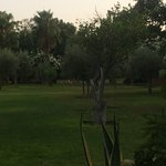 The olive grove garden