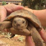 wild tortoise in the gardens