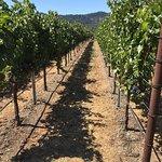 Robert Mondavi Winery Foto