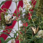 Many of the plantings are designed to attract butterflies.