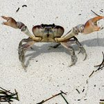 This crab very graciously posed for me on the beach.