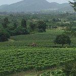 Hua Hin Hills Vineyard Foto