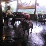 Doggie Dining & The Doggie-Menu was delightful!