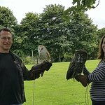 Falconry - Working with owls