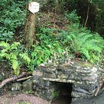 St Finian's Holy Well