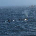 Foto di Five Star Whale Watching
