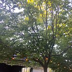 Fruitless mulberry trees on the terrace provide shade