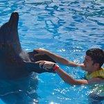 Photo de Dolphin Discovery Puerto Aventuras