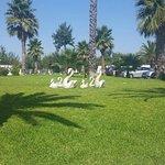 Elite City Resort Foto