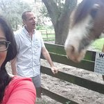 This is us with the hotel's horse, Buddy. He was quite a character!