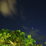 Palm trees under the stars