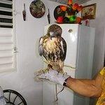 Le faucon de Roberto