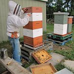 apiary - which yields wonderful honey for breahfast!