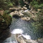 Photo de Lynn Canyon Suspension Bridge
