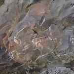 Arte rupestre dentro de la cueva