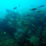 School of fish at SCUBA excursion.