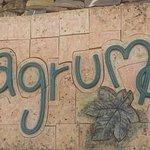 Yagrumo