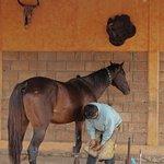 Foto di Rancho Las Cascadas Riding Tours