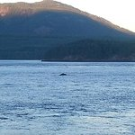 The Humpback Whale we saw