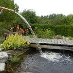 Le bassin au plantes aquatiques